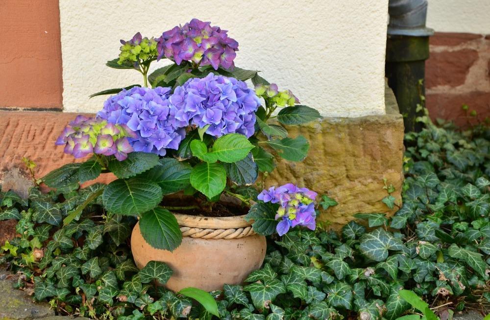 flowerpot-1345371_1280